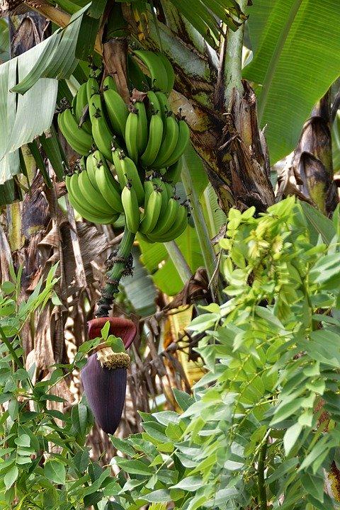 , El Amazonas es un bosque de alimentos intencional, los investigadores descubren…