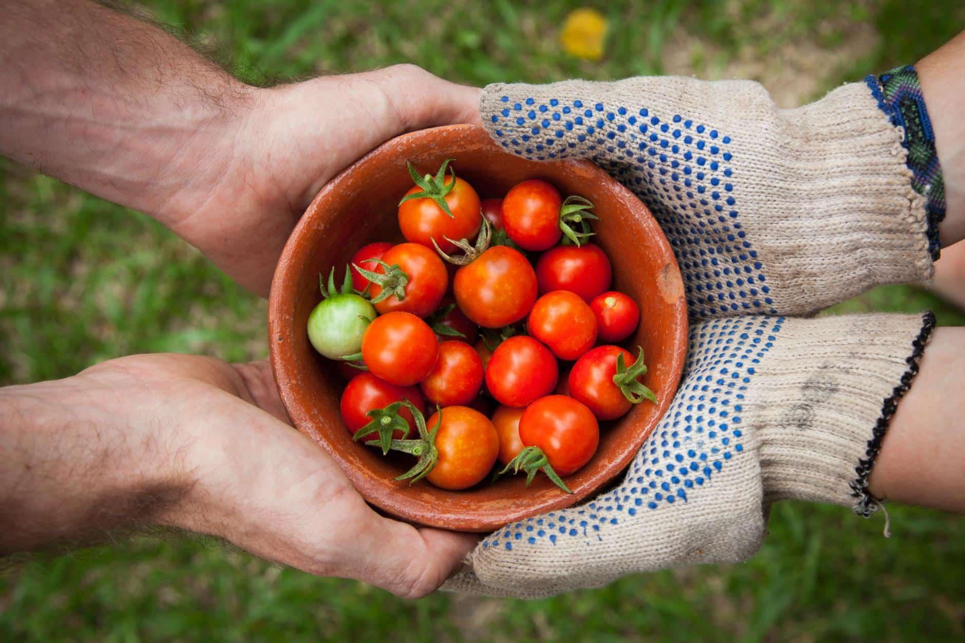 La Jardinería puede ayudar con la Depresión