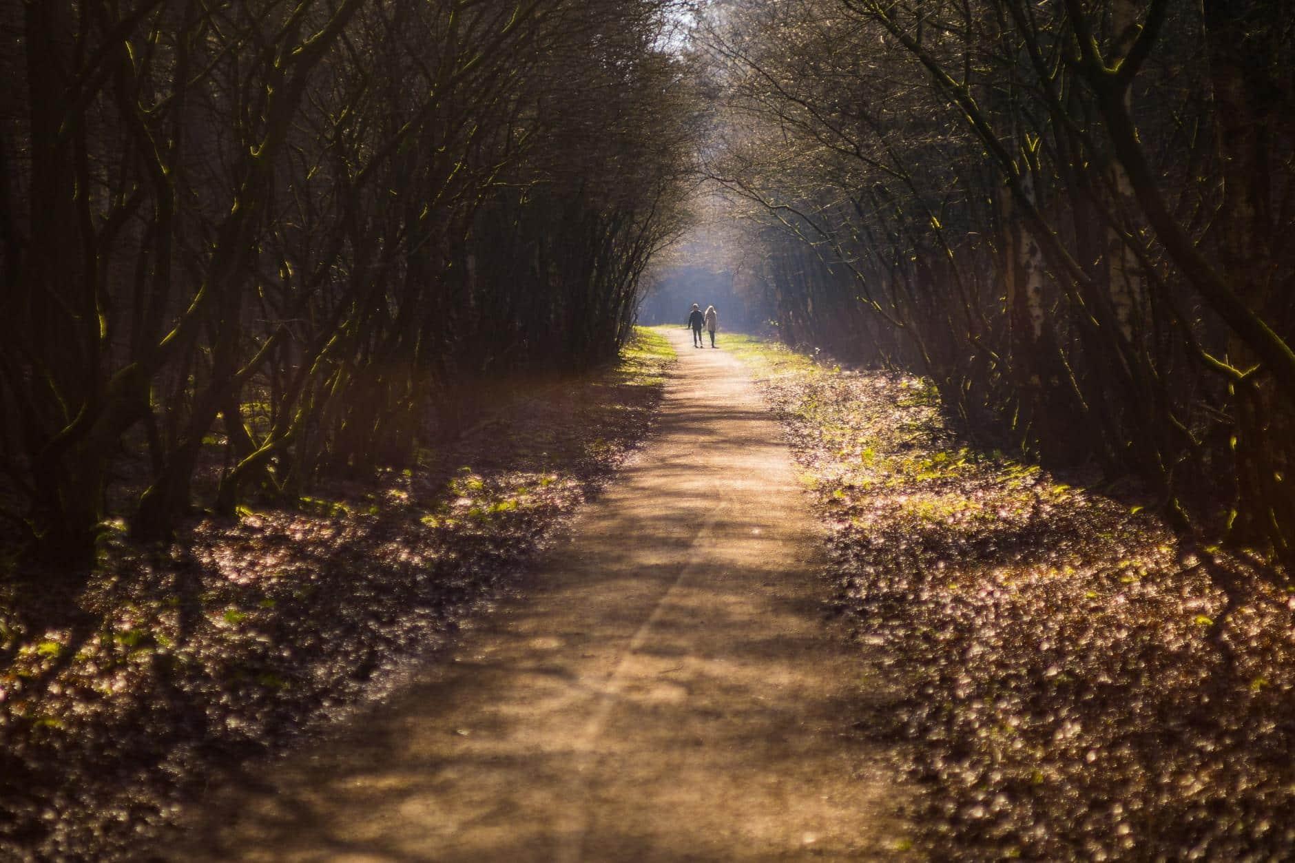 Por qué salir a caminar puede cambiar tu vida
