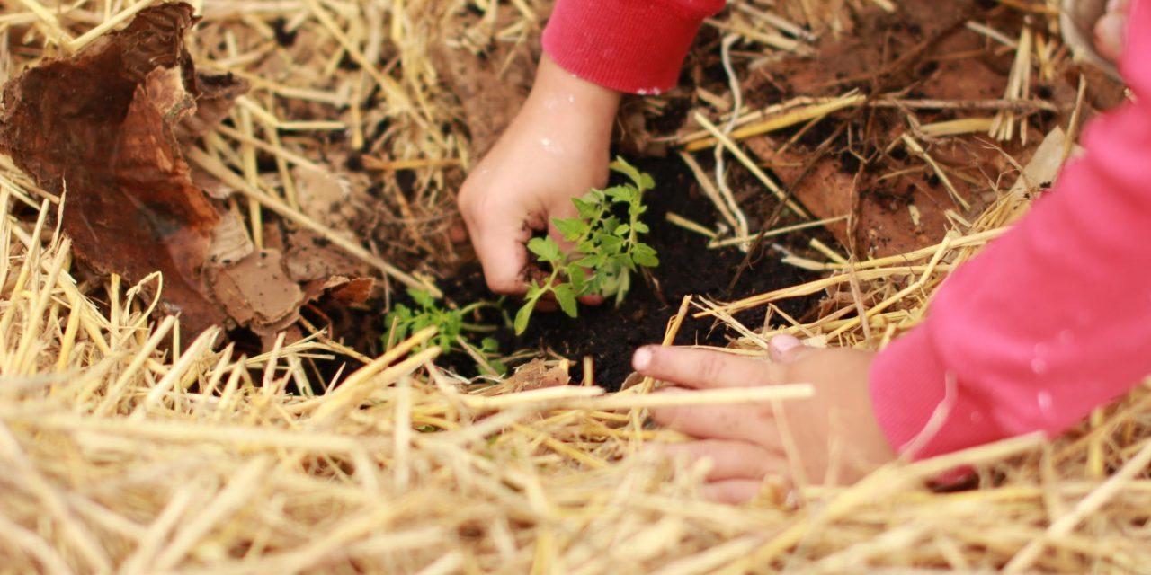 12 métodos de cultivo inusuales que te van a sorprender