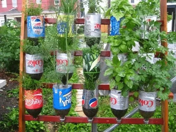 15 alimentos que podemos cultivar en contenedores plásticos