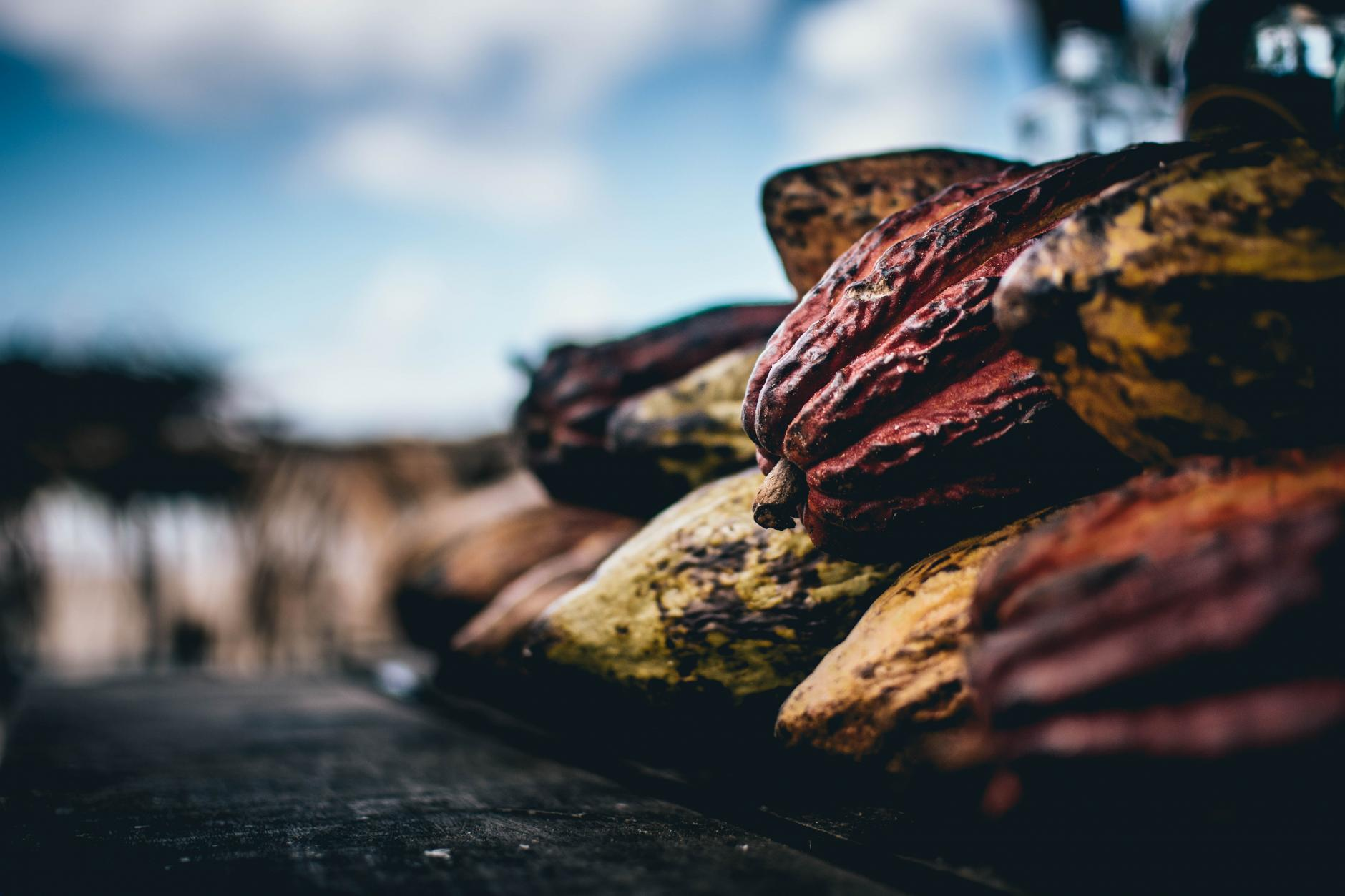 , Cacao, Beneficios y Propiedades Medicinales