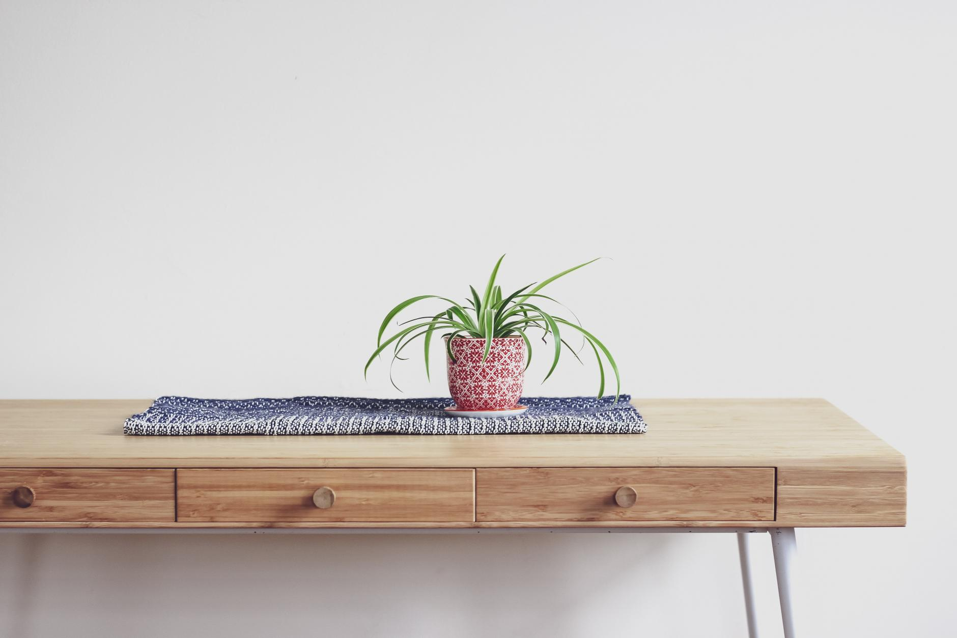 6 plantas de interior que absorberán la humedad en su hogar