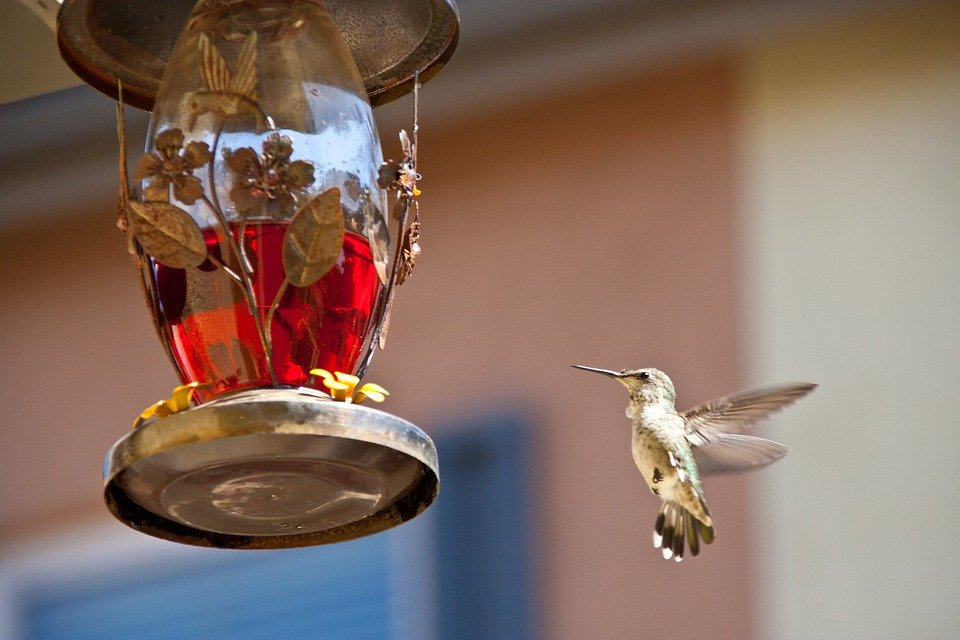 Crea tu propio jardín para Colibríes y ayudá a proteger a los Polinizadores
