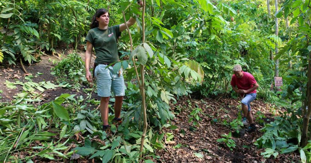 """Este """"árbol milagroso"""" puede ayudar a combatir la destrucción de los bosques"""