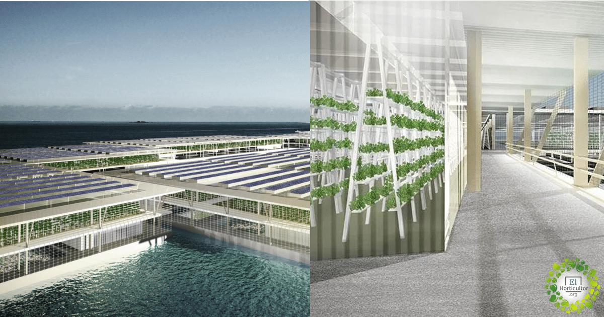 , Crean granjas solares flotantes que producen hasta 20 toneladas de verduras al día