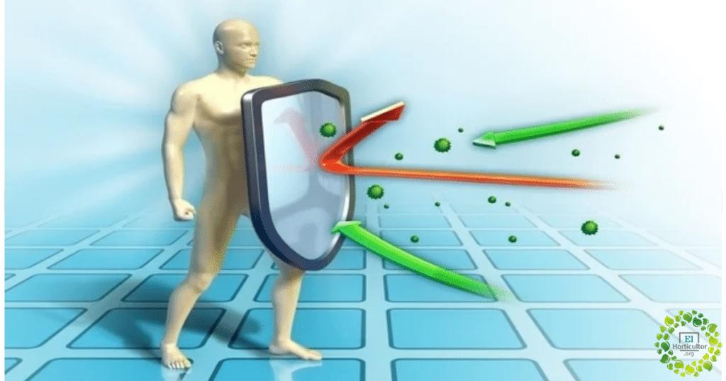 , Cómo estimular su sistema Inmunológico para evitar resfriados y Coronavirus