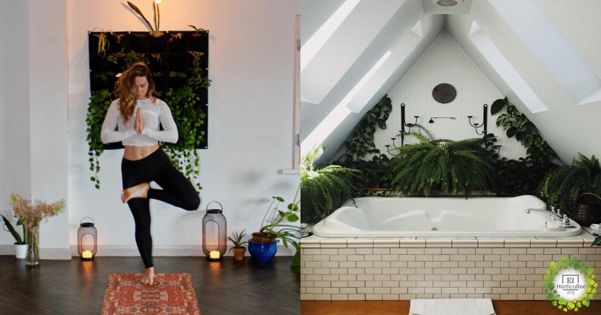 , 6 plantas de interior que absorberán la humedad en su hogar