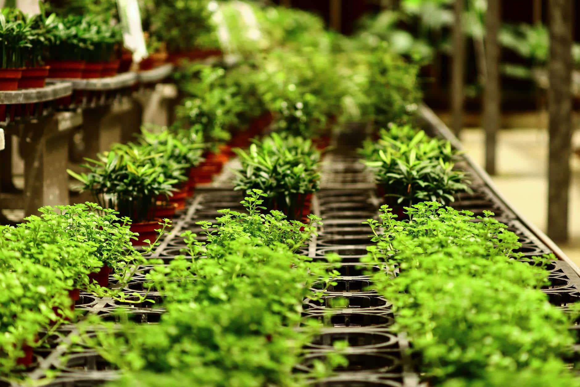 Hoy comienza curso virtual y gratuito de Agroecología para todo público, animate!