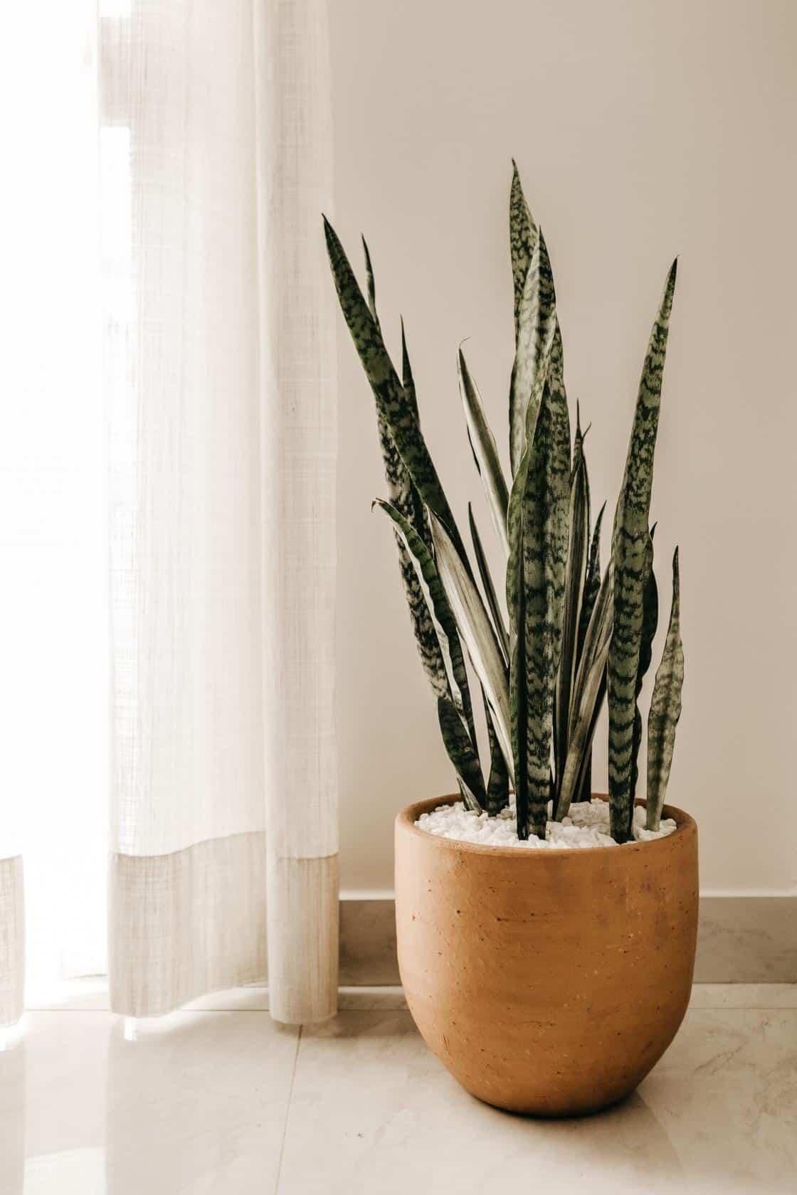 Porqué es tan importante tener esta planta en tu hogar u oficina