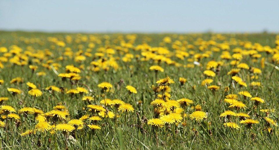 20 Flores comestibles y nutritivas que