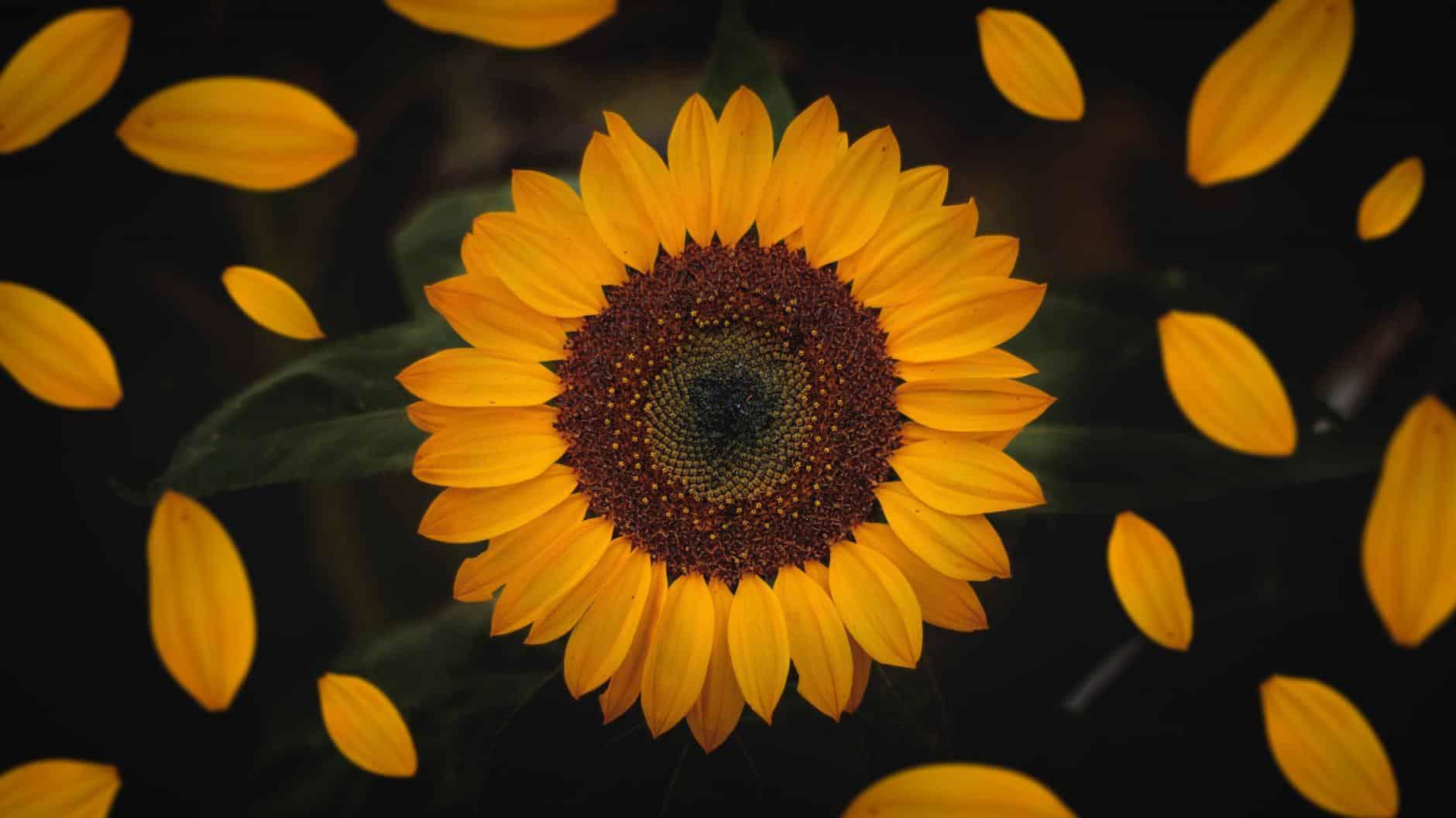 23 flores comestibles y nutritivas!