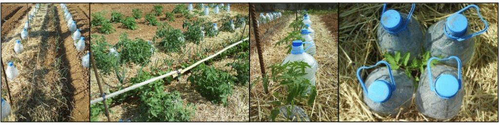, Sistema de riego Casero, de alto rendimiento, y cero costo para su huerto