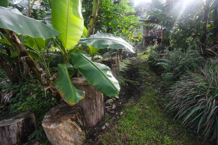 Familia aplica la permacultura para vivir