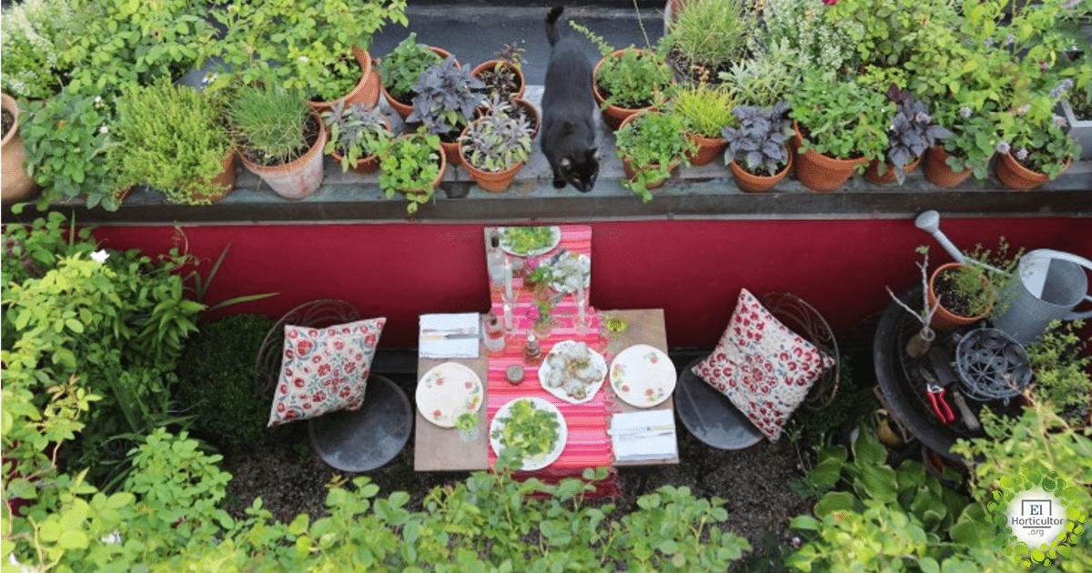 , 10 alimentos que crecerán felizmente en tu balcón