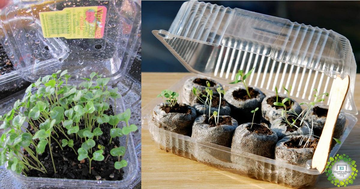 , Cómo reutilizar los envases plásticos del supermercado para hacer micro-invernaderos y germinar tus semillas