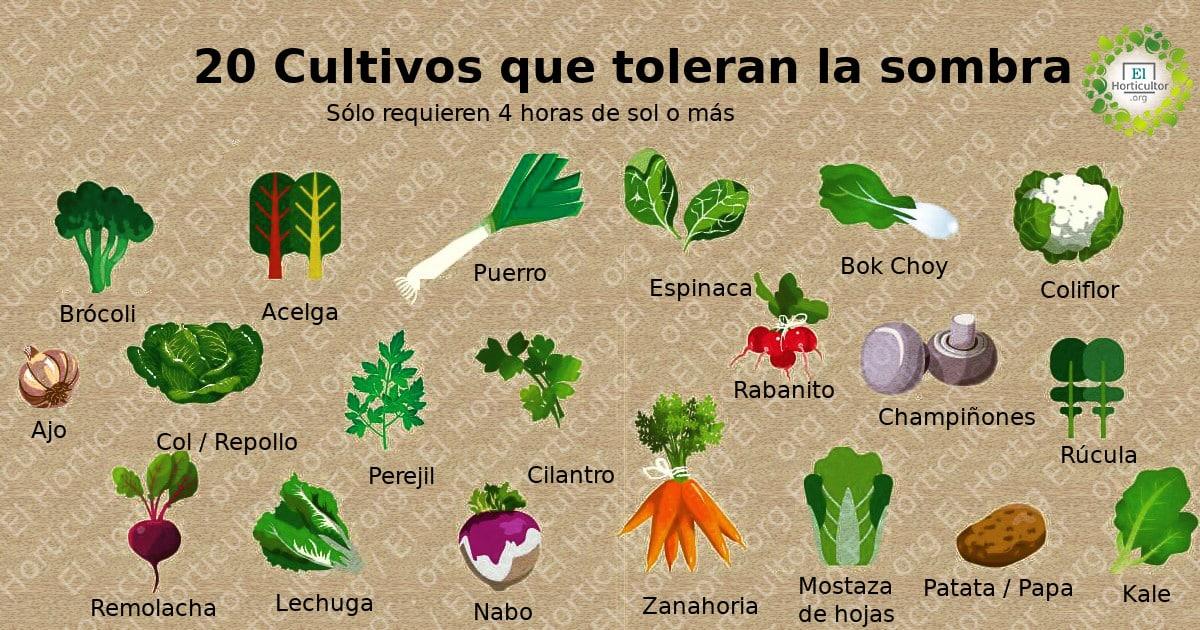 , 20 Alimentos que puedes cultivar a la sombra