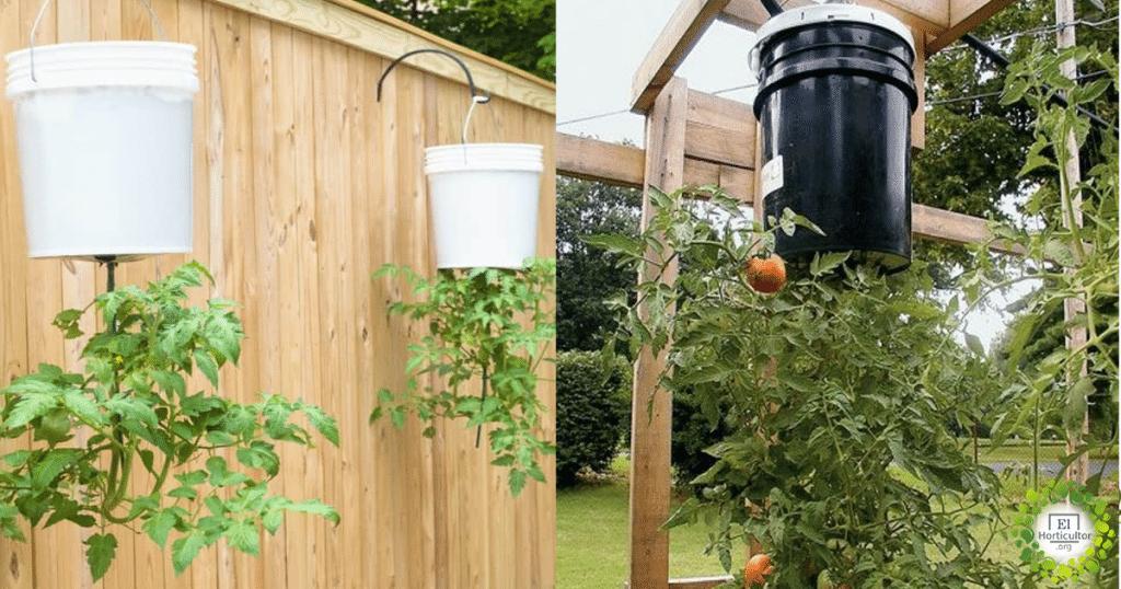, Cómo cultivar tomates al revés