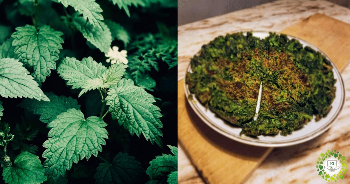 , El auge de la ortiga: El alimento medicina de nuestros ancestros + Recetas