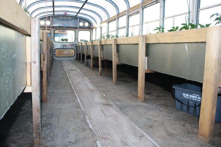 , Canadiense convierte autobuses abandonados en Invernaderos