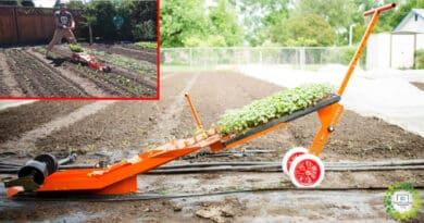 , Esta máquina es capaz de plantar cientos de plántulas en sólo unos minutos