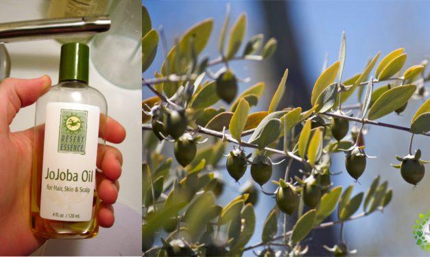 Aceite de Jojoba, Propiedades, usos y Beneficios