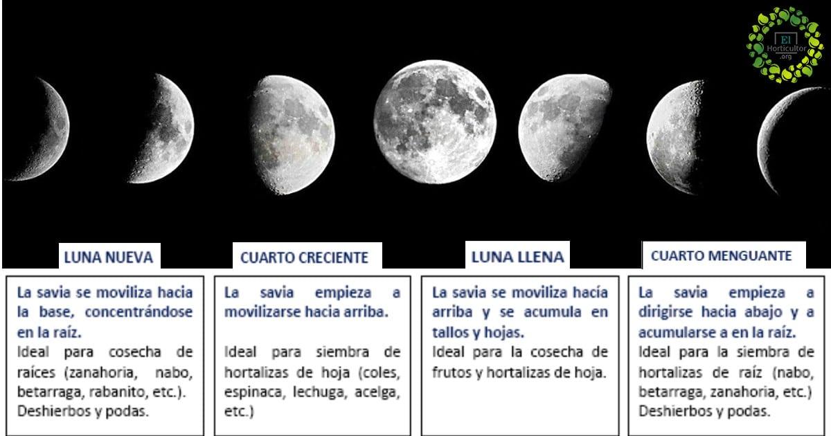 , Cómo cultivar con las fases de la luna + fácil de recordar!