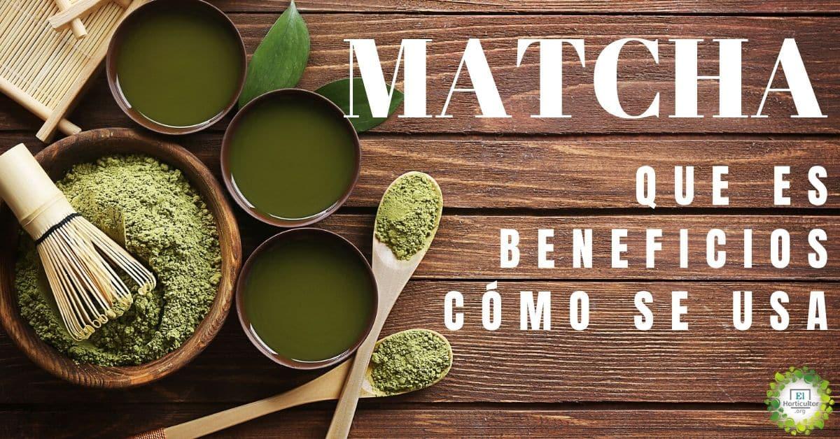 , ¿Qué es el té matcha?, beneficios, contraindicaciones y cómo se usa