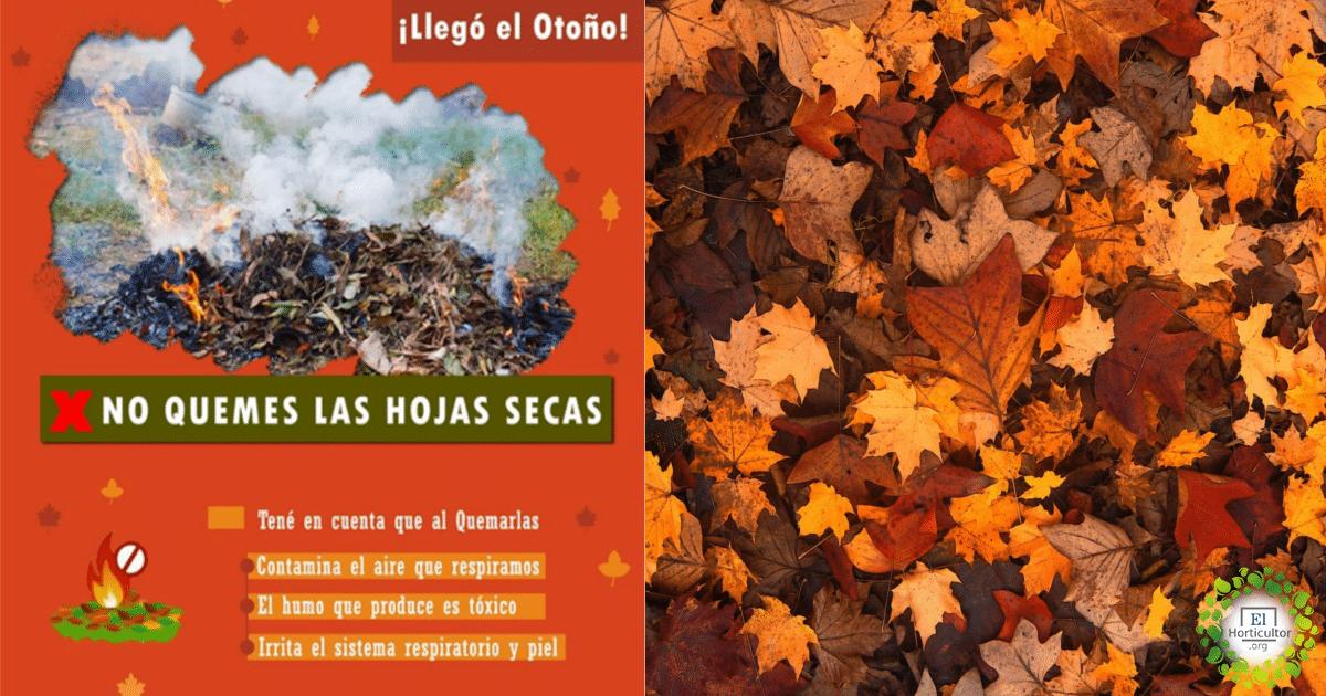 , ¡No las quemes! Las hojas del otoño, las mejores aliadas para tu Huerta y Jardín