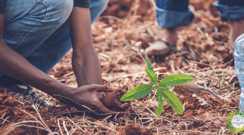 , Bruselas plantará un árbol por cada bebe recién nacido