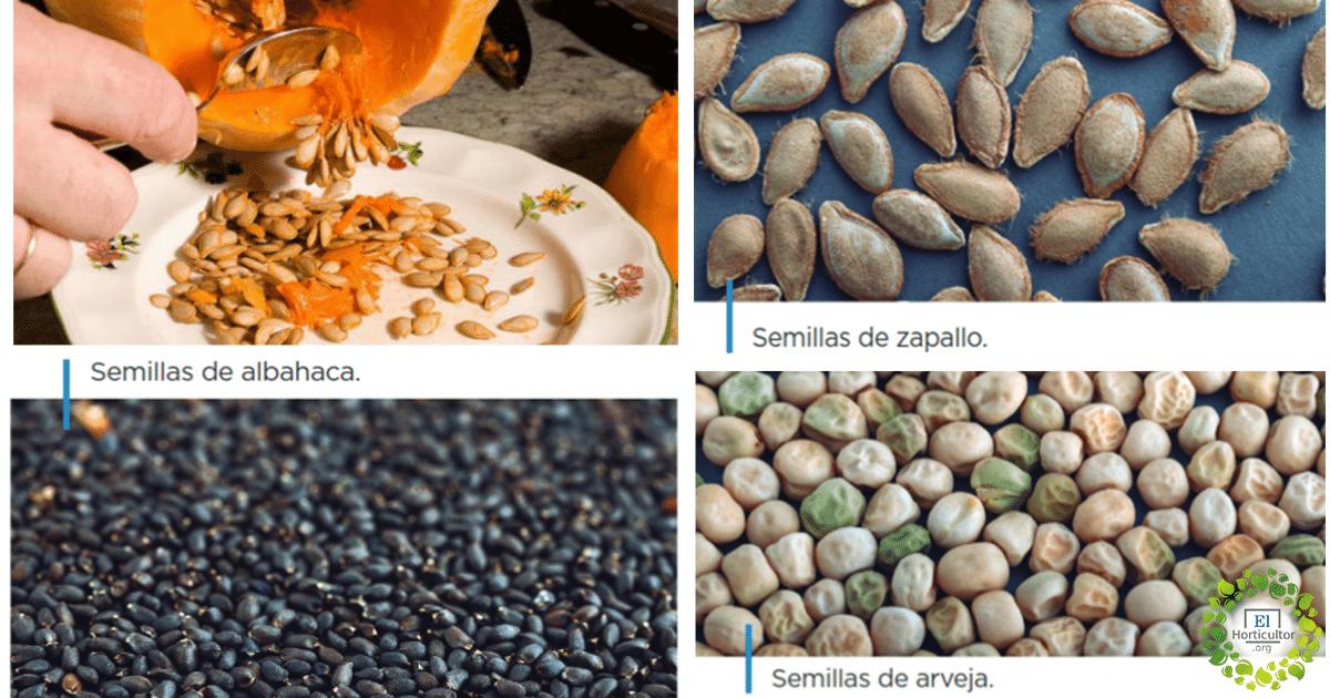 , Cómo producir tus propias semillas para la huerta