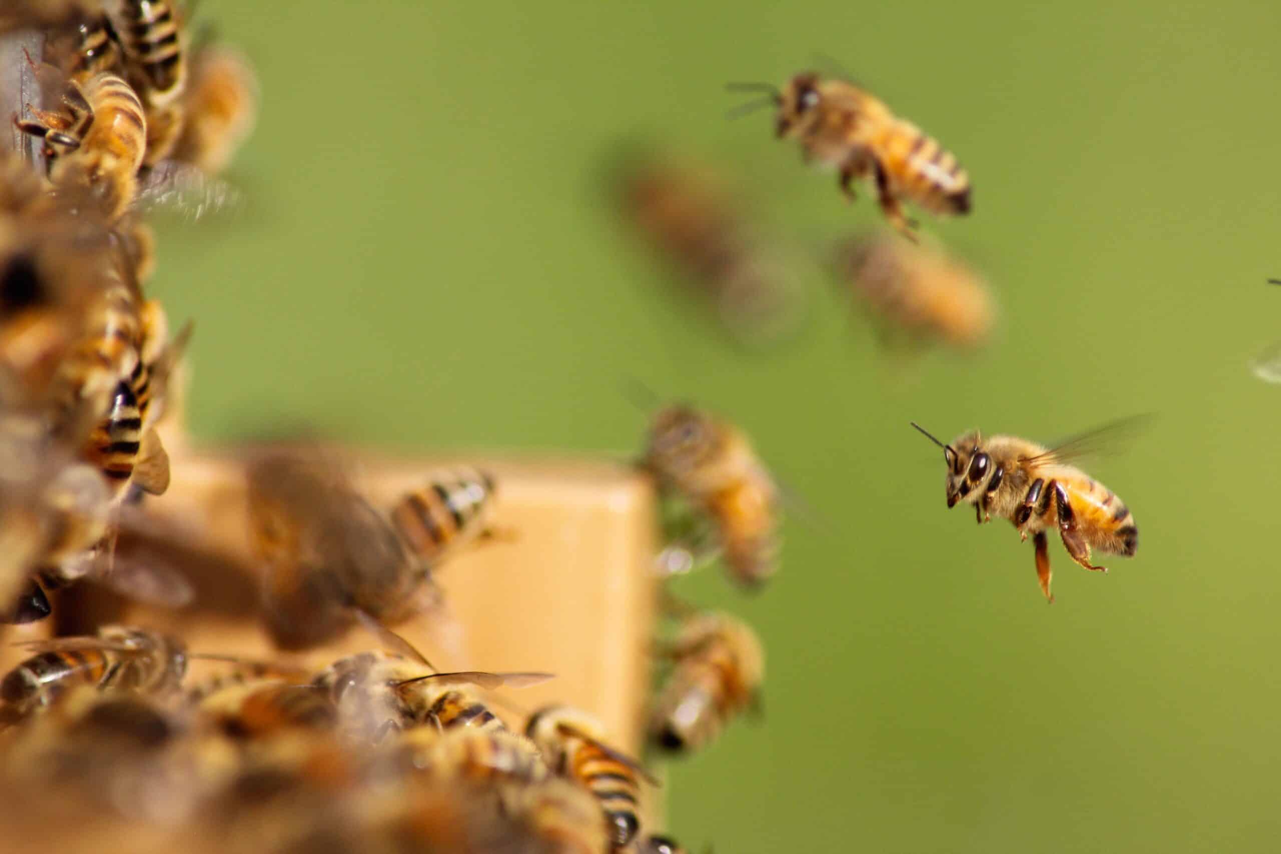 , Salvemos a las abejas! 10 cosas que puedes hacer para ayudar a salvarlas