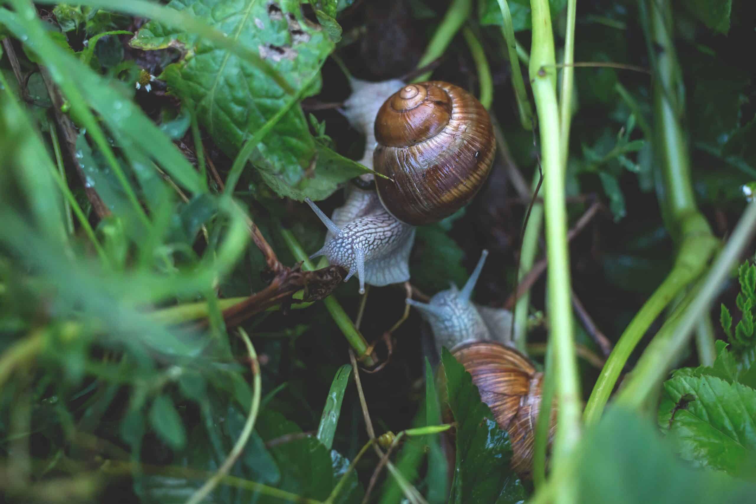 Usos de las cenizas en el huerto caracoles