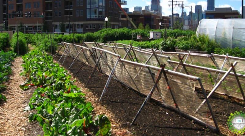 , Los huertos urbanos podrían alimentar al 15% de la población según estudio.