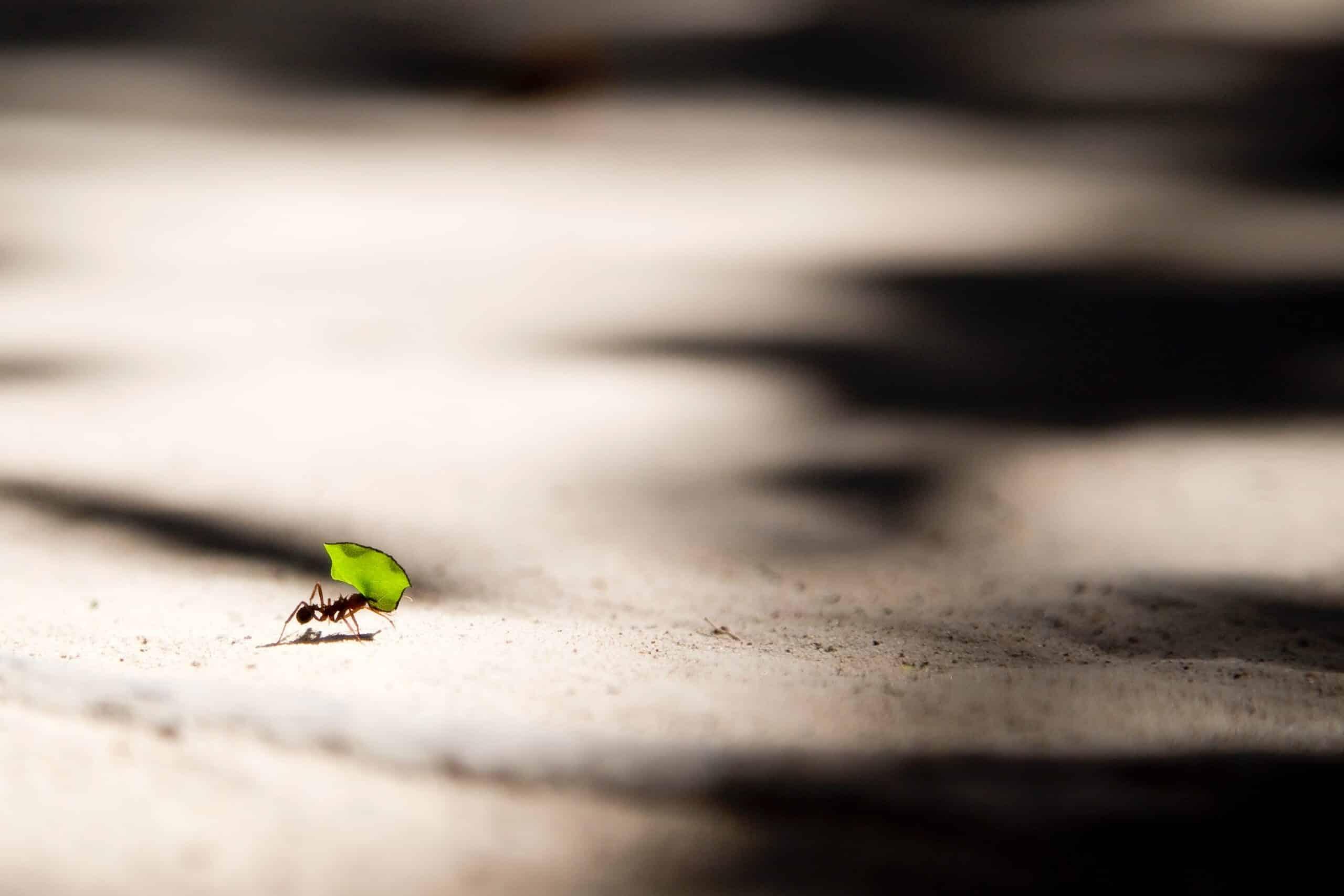 Usos de las cenizas en el huerto control de hormigas