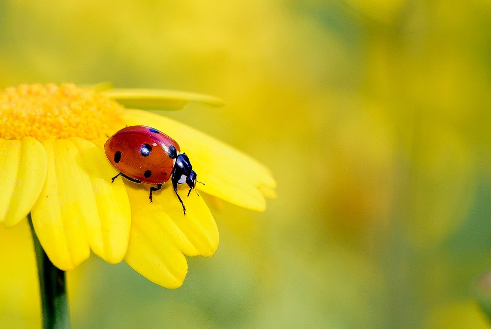 Adiós agrotóxicos: los insectos pueden reemplazar a los pesticidas contra las plagas