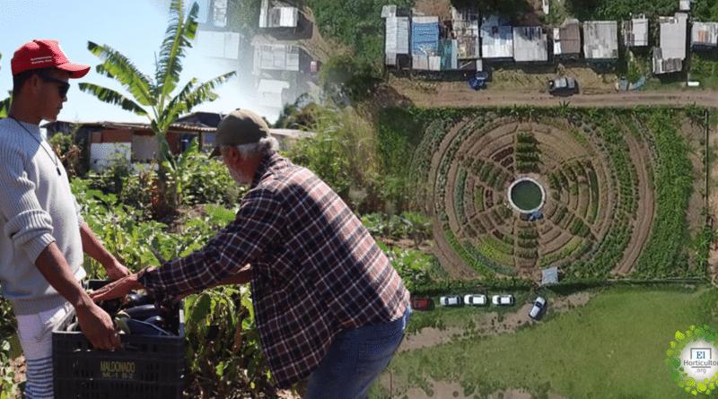 , Convierten cancha de fútbol en huerta orgánica para alimentar a 1,000 familias