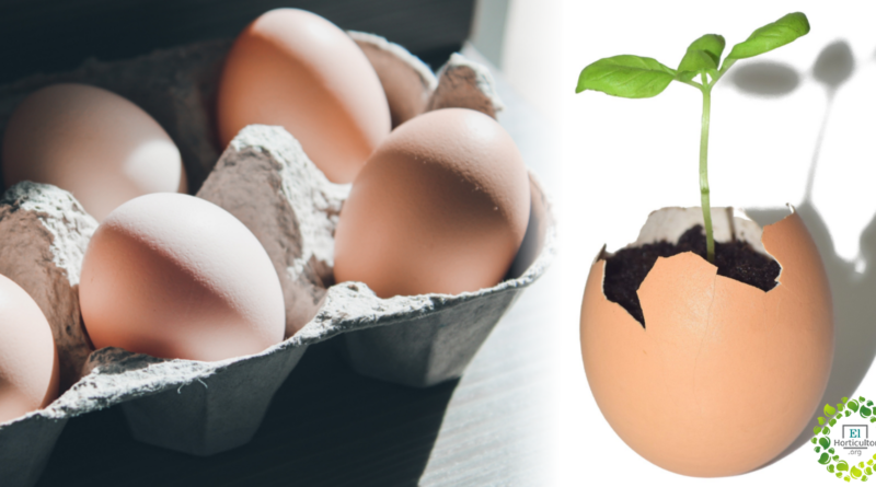 , Desde hoy no tirarás más las cáscaras de huevo