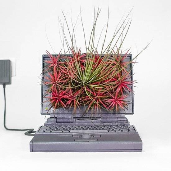 Computadoras antiguas son convertidas en bellas macetas