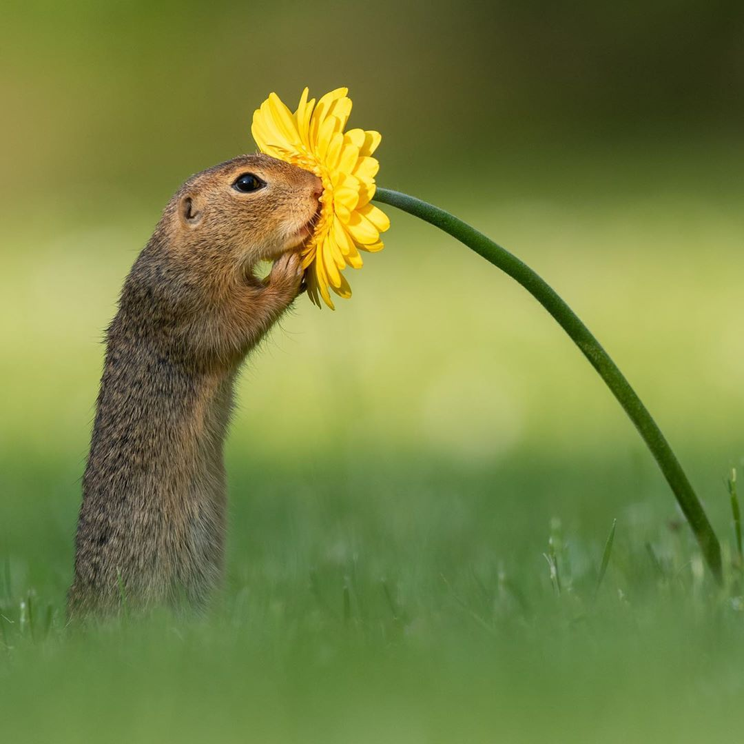 Fotógrafo captura el momento en que una ardilla huele una flor amarilla y la imagen se vuelve viral