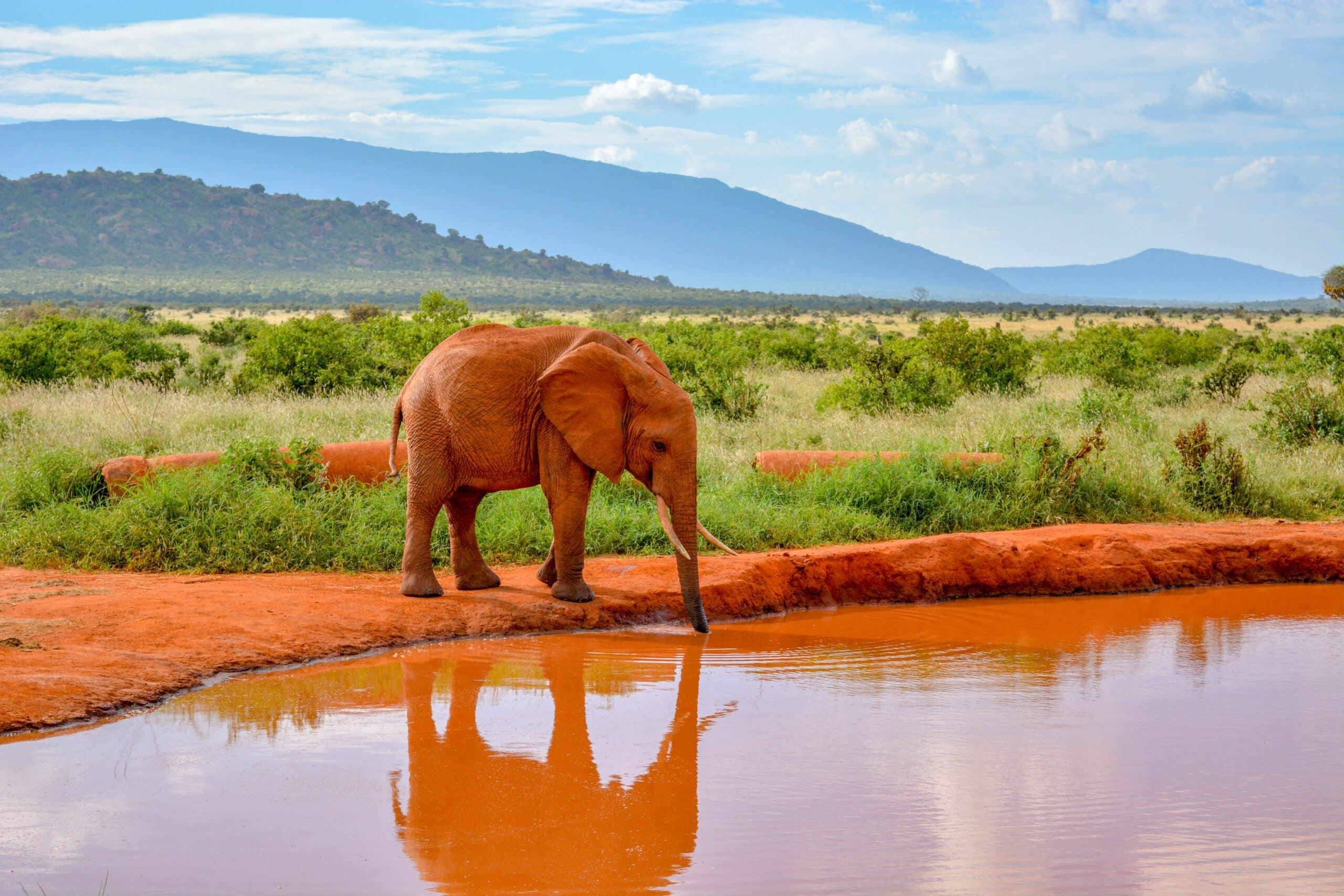 , Boom de elefantes bebes en África, nacieron más de 140 en 2020