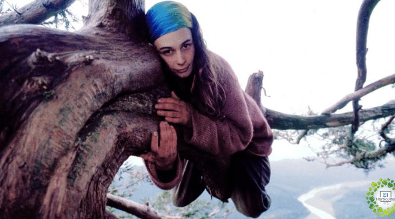 , Ella vivió 2 años en la cima de un árbol milenario para evitar que la talaran