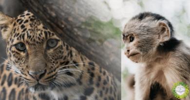 , Colombia prohíbe la caza deportiva de animales