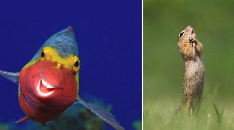 40 fotos finalistas del Premio a la Comedia de la Vida Silvestre 2020 que debes ver