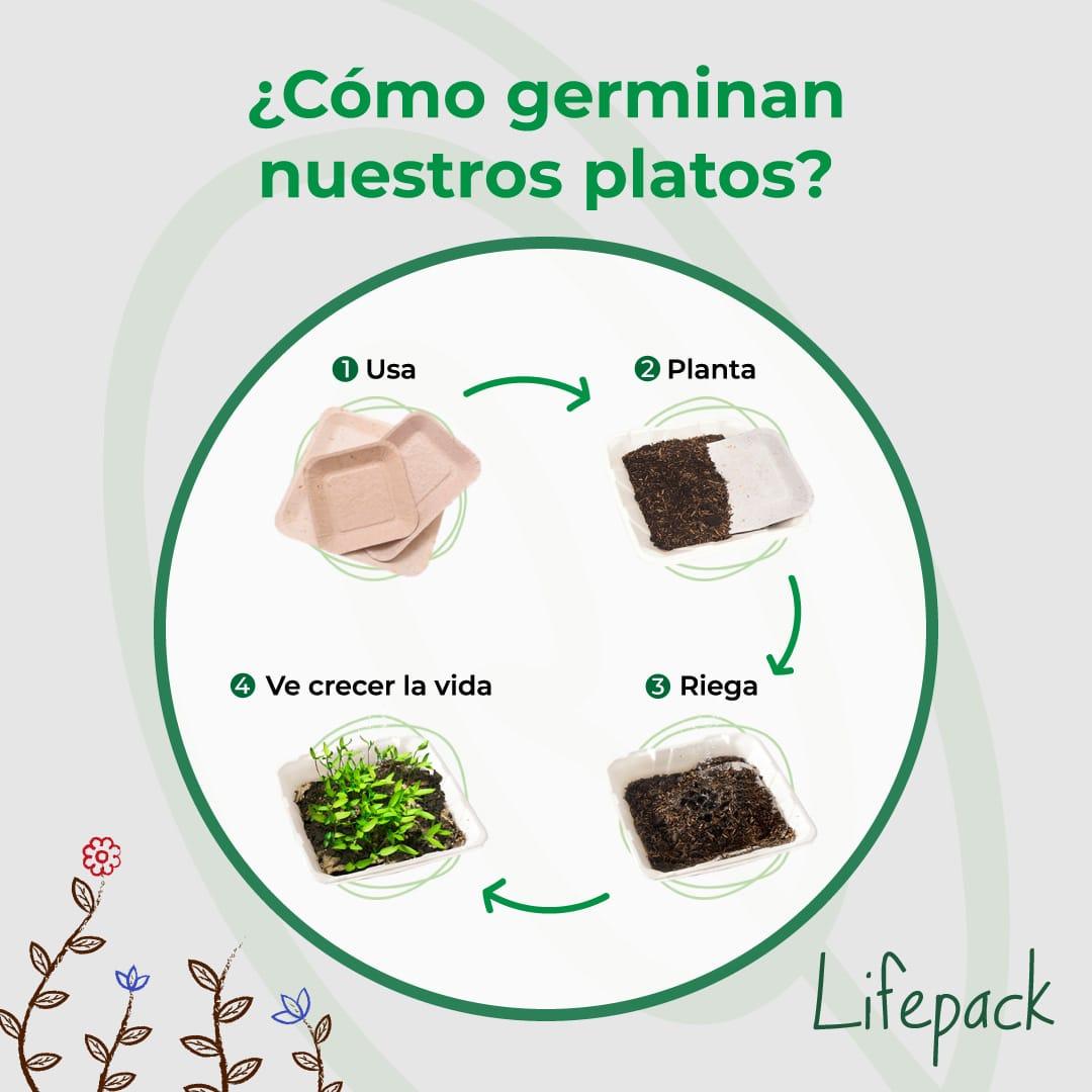 , Platos Germinables: transforma tu plato de comida en una hermosa planta