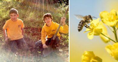 Dos adolescentes crean un proyecto medioambiental y reconstruyen 20 km de jardines para salvar a las abejas (EE. UU.)