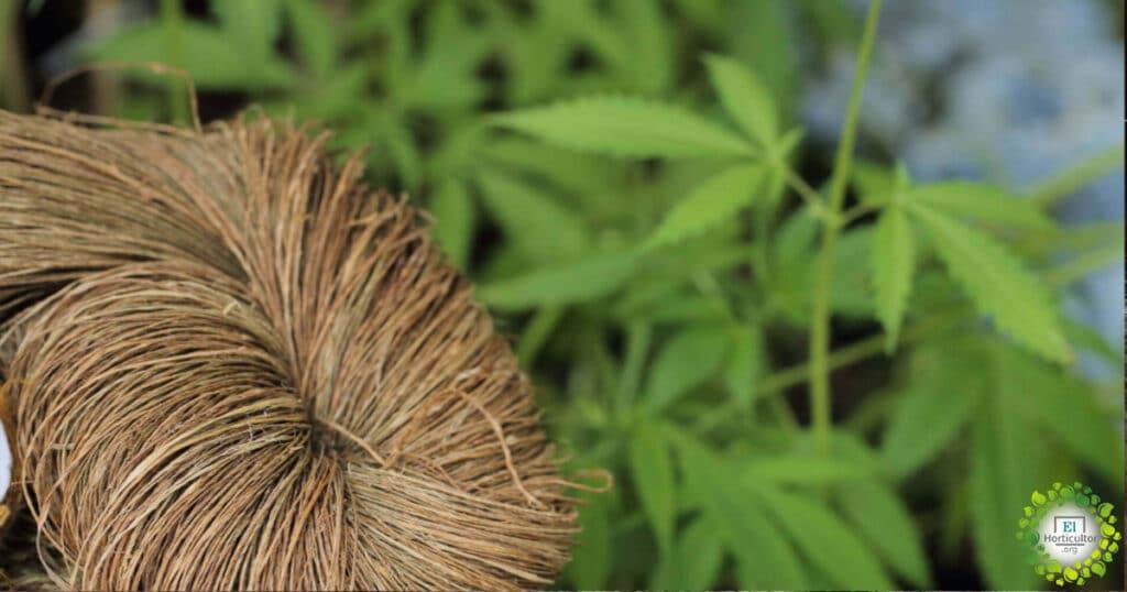 fibras naturales reemplazan plastico