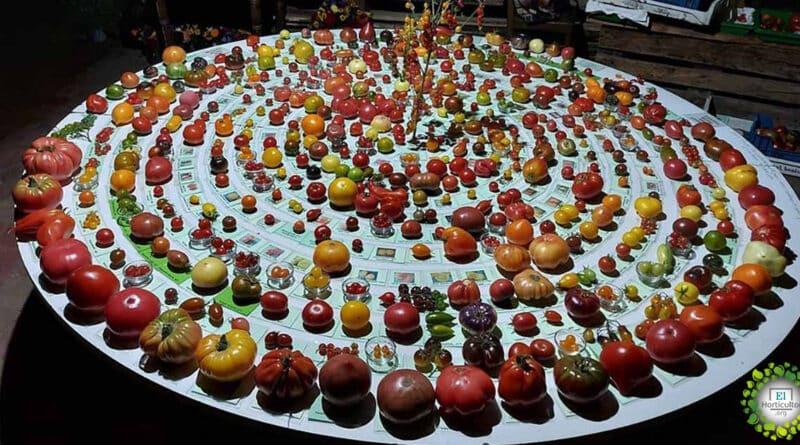 , Michael Schick, el maestro huertero que cultiva más de 900 variedades de tomates