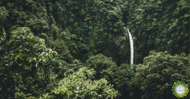 , Descubre cómo Costa Rica ha duplicado sus selvas tropicales en los últimos 30 años