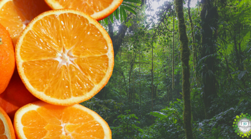, Cómo 12.000 toneladas de cáscaras de naranja revivieron un bosque